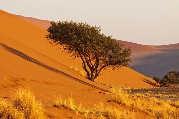 deserto, aridità, difficoltà, vita