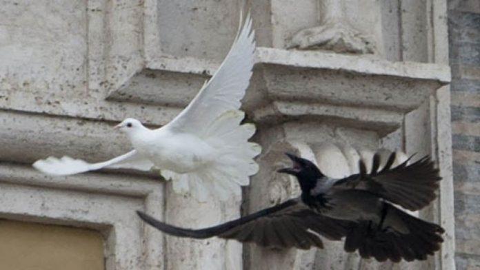Colomba corvo San Pietro